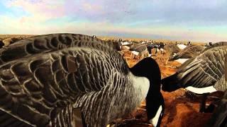 2015 Goose and Sandhill Crane Hunt Lubbock TX
