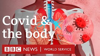 What does Covid-19 do to the body? - BBC World Service