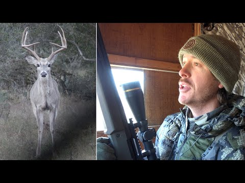 The Best Deer Hunting Sit I've Ever Had!   Big Bucks & Predators!
