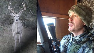 The Best Deer Hunting Sit I've Ever Had! | Big Bucks & Predators!