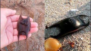 Chàng trai bắt được vật thể lạ trên biển, không ngờ nó thuộc về một trong những bất ngờ về sinh học