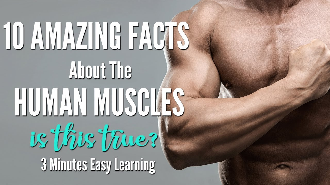 10 Amazing Facts About Human Muscles | Human Muscular System Anatomy | Fun Interesting Muscles Facts