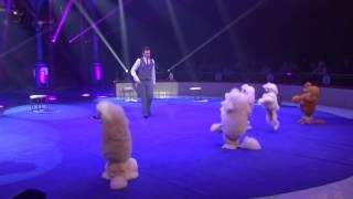 Komissarenko 'Poodle Show'
