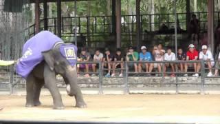 Слоны. Интересное шоу слонов в Таиланде.