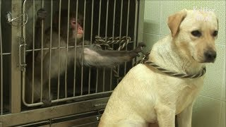 Bullied Monkey Becomes Friends With A Dog | Kritter Klub