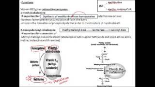 biochemistry vitamins B12 cobalamine  فيتامين بايوكيميستري