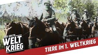 Gefährten im Graben - Tiere im 1. Weltkrieg