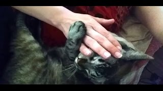 Cute Cat Wants Some Petting (5)