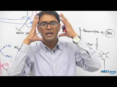 Reflex Action & Reflex Arc | Neural Control & Coordination - NEET & AIIMS preparation videos
