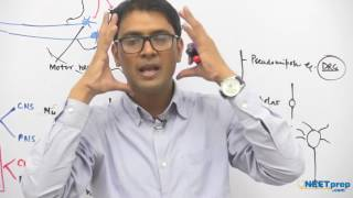 Reflex Action & Reflex Arc   Neural Control & Coordination - NEET & AIIMS preparation videos