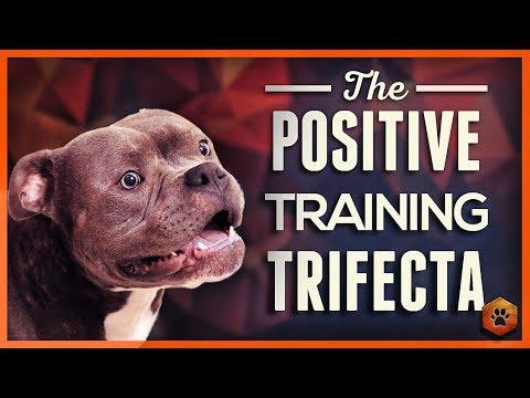 Teach Your Dog to Listen - the Positive Training Trifecta!