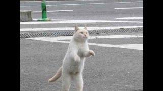 Обязательно к просмотру!Видео с кошками!Танцуют, сидят, едят!Приколы!