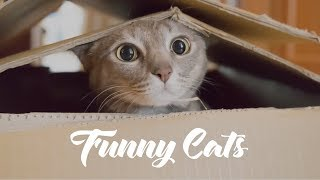 6 minutes of funny cats! FunnyAboutAnimals.com