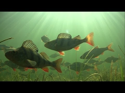 Sunset underwater in Grand Canal, Ireland. Relaxation & meditation video for fishermen. HD.
