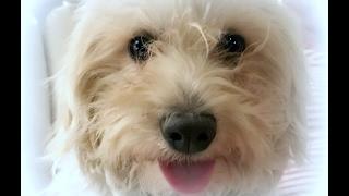 Rosalee Adoption Movie TracysDogs