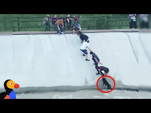 People Form Human Chain To Rescue Dog From Canal | The Dodo