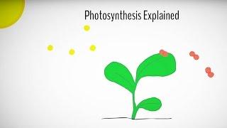 Photosynthesis explained