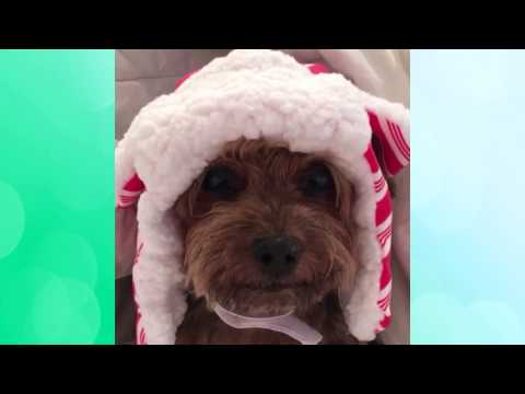 Cute Animals Vine , November and December