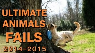 Repeat youtube video Ultimate Animal Fails Compilation 2016