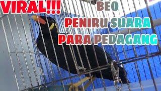 Beo HEBAT/PANDAI BICARA Meniru Suara Para Pedagang/Beo Super Lucu/Beo Bersiul/Beo Ajaib/Beo Viral