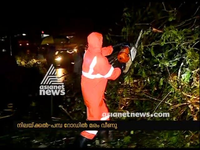 Heavy rain in Nilakkal; Traffic disrupted due to tree fell in road