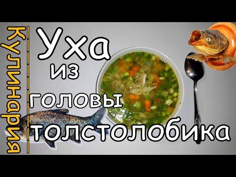 Уха из Головы Толстолобика с Корнем Сельдерея и Чабреца. Просто, Вкусно и Недорого