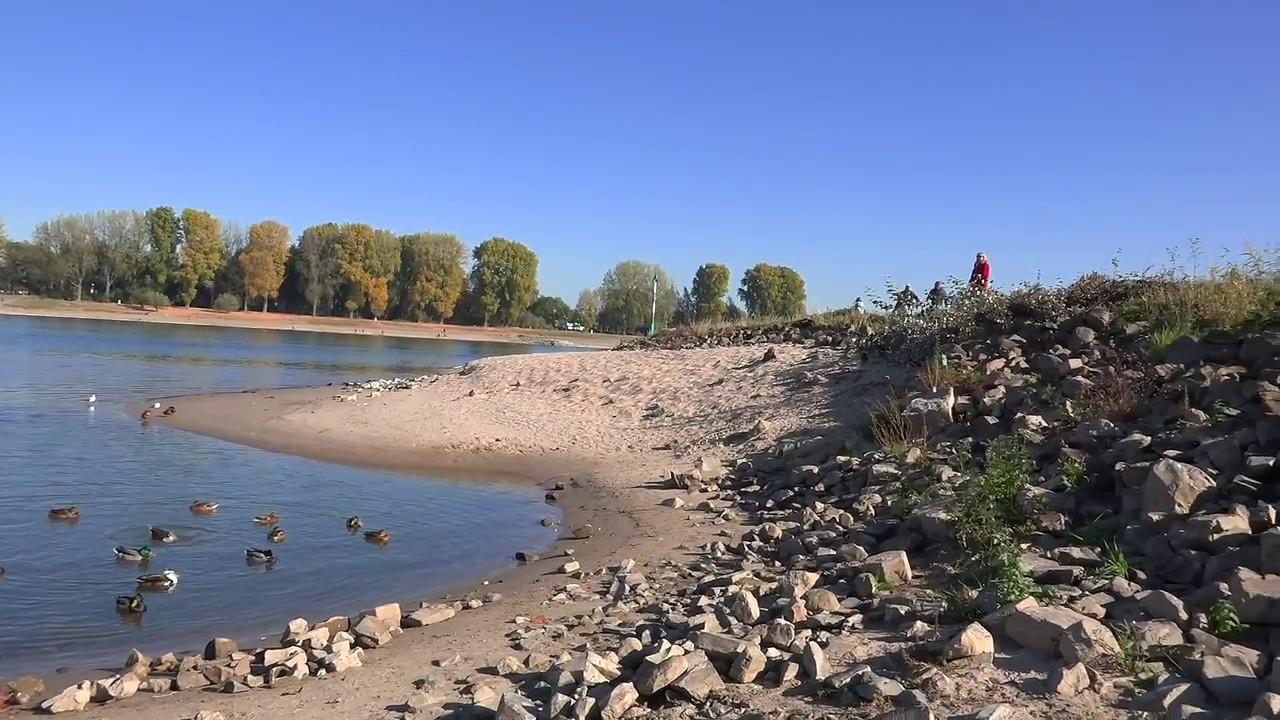 Niedrigwasser am Rhein 21102018