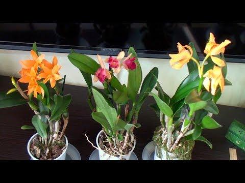 ОРХИДЕИ С СЮРПРИЗАМИ // уцененные орхидеи почтой