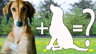 9 Gorgeous & Graceful Greyhound Mixed Breeds