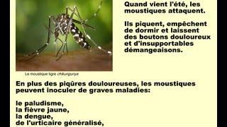 Se débarrasser des moustiques, soulager les piqûres d'insectes