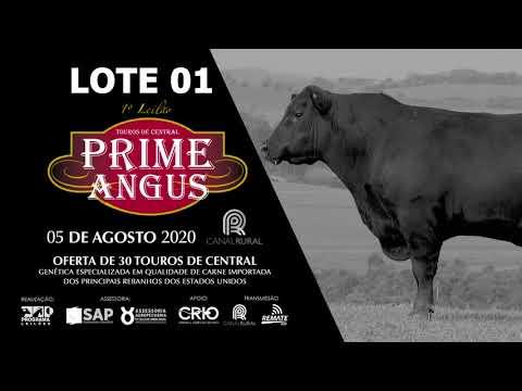 LOTE 01   BLACK OPAL TE859  WOLFGANG Prod  Agência El Campo