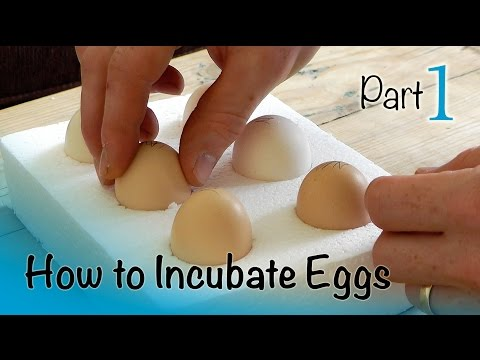 How to Incubate and Hatch Eggs | Part 1 of 3 | Setting up the Incubator