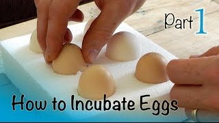 How to Incubate and Hatch Eggs   Part 1 of 3   Setting up the Incubator