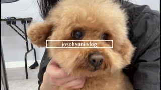 Vlog) 애견미용3급 실습생. 학원 브이로그. 강아지…