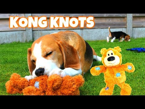 Funny Dog Toy Critics 'Louie and Marie' Episode #8 : KONG WILD KNOTS