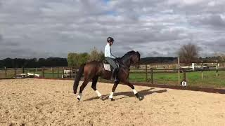 4 year old mare by Quantensprung
