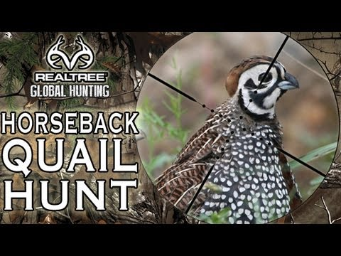 Hunting Quail In Alabama