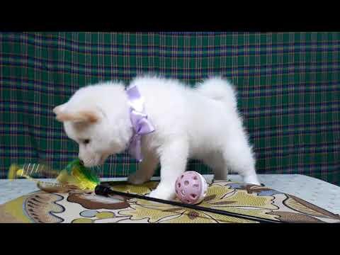 PuppyFinder.com : Belle's video 1
