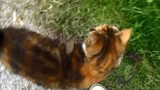 Cat Control - wie ich mit der Katzensuche starte
