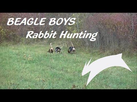October Training - Beagle Boys Rabbit Hunting - 2015