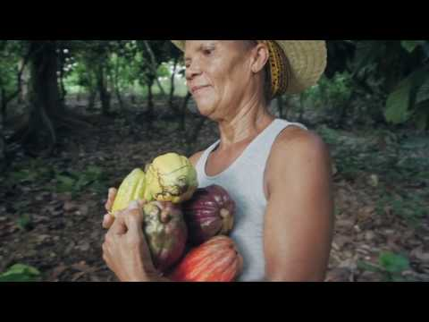 CHOCOLATE DOCUMENTARY: Cacao farmers in the Dominican Republ