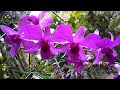 Orchids that grow naturally