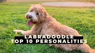10 Personalities of a Mini Labradoodle