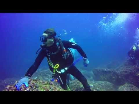 Galapagos Revisted - 2016 - 4K Dive Highlights