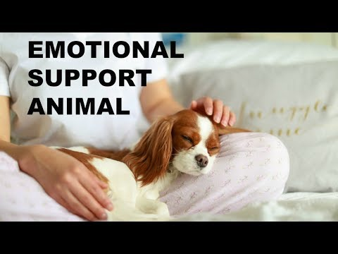 Emotional Support Dog - How to Get an Emotional Support Animal