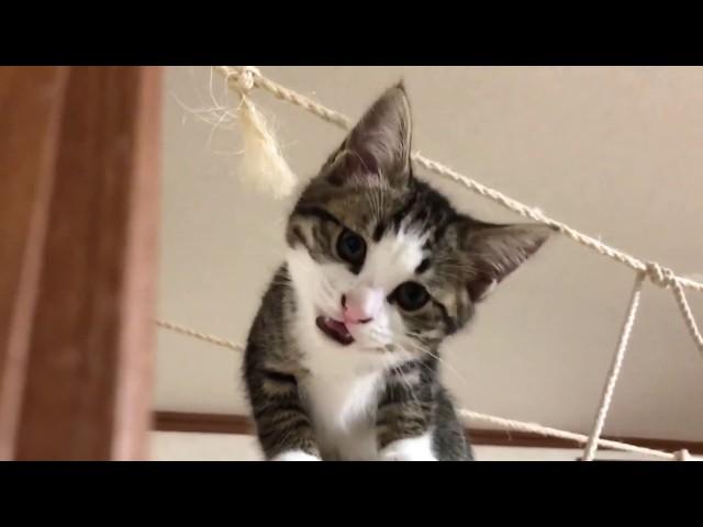 「撫でろ」が分かってもらえない子猫がかわいい
