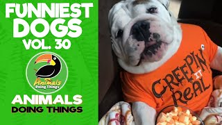 🐶  Funny Dogs Vol. 30 | Animals Doing Things
