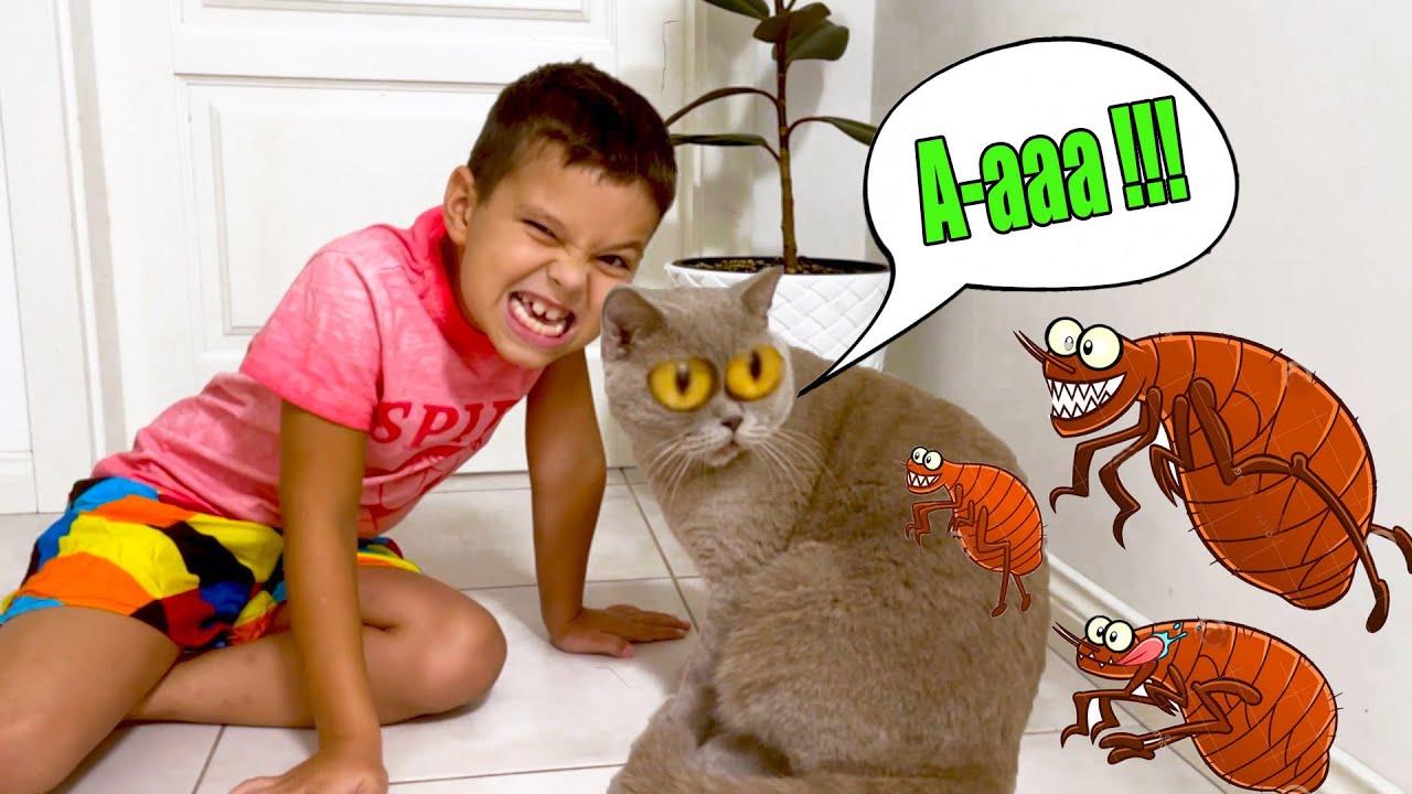 Влог у кота Тома БЛОХИ