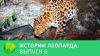 История леопарда  Выпуск 6 @ Живая Планета