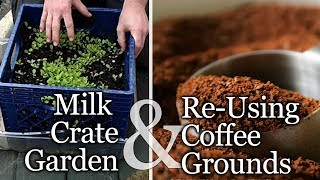Bean Starts And Used Coffee Grounds - The Wisconsin Vegetable Gardener